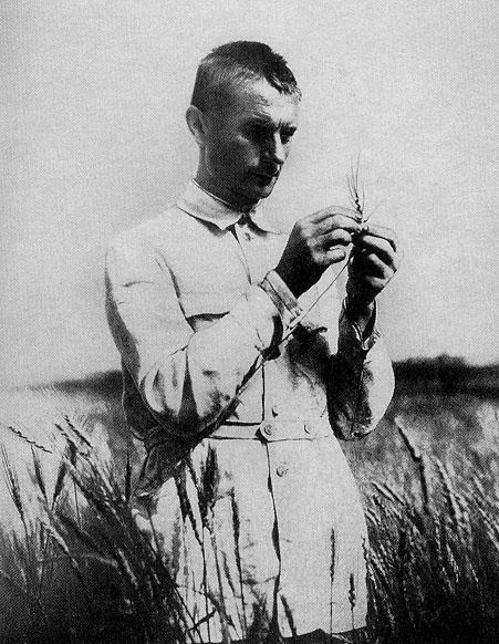 Lysenko en un campo de trigo