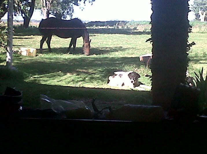 rocky con caballo