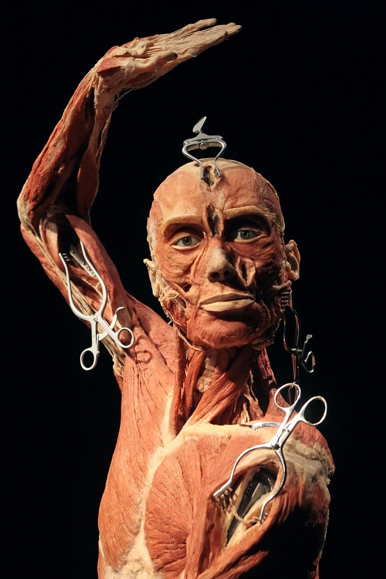 BRITAIN-ENT-SCIENCE-BODYWORLDS